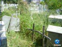 Matalgal lentamente toma de conta do principal cemitério da cidade