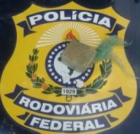 droga-apreendida-292040